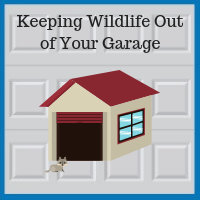 Blue Sky Builders garage repairs wild animals