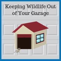 Blue Sky Builders garage repairs wild animals